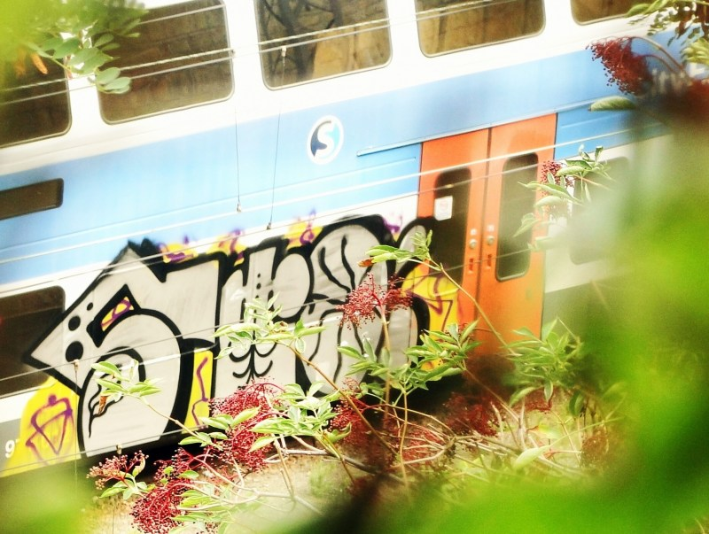 Photo #168232 by Stoner
